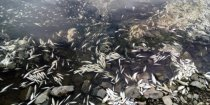 Националисты отвлекают от экологической катастрофы в Западном Казахстане
